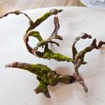 Jedlé větve